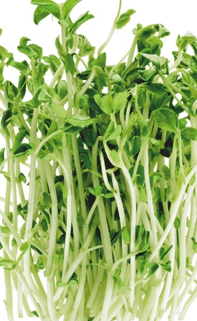 image of pea shoots